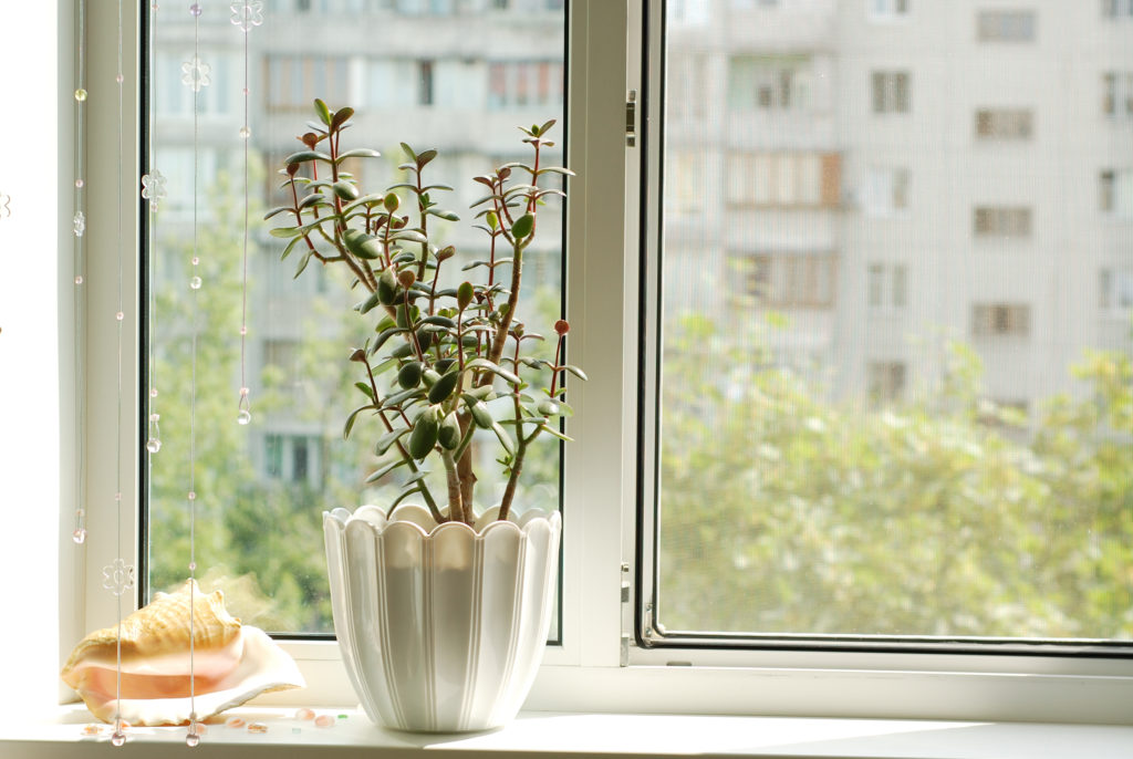 Window with flowerpot in front view