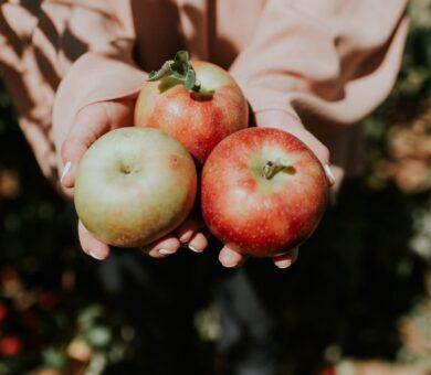 Hände halten drei Äpfel