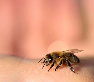 Biene auf Hand